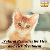 Natural Remedies for Flea and Tick Treatment in Cats