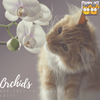 Cats and Flowers: Are Orchids Poisonous to Cats?