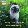 Letting Cats Enjoy the Outdoors Safely