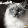 A Quick Introduction to the Ragdoll Cat Breed