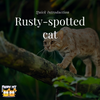 Rusty-spotted Cat: A Quick Introduction