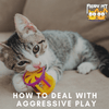 Help! My Kitten Is An Aggressive Player! What Do I Do?