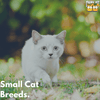 Cute and Adorable Small Breed Cats