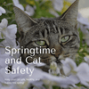 Keep Your Kitty Safe This Spring!
