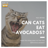 Can Cats Eat Avocados?: Here's Your Definitive Answer!