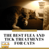 The Best Flea and Tick Treatments for Cats Available on the Market