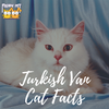 5 Turkish Van Cat Facts