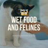 Wet Food and Felines: How Much Wet Food Should I Give My Kitty?