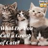 FAQs: What Do You Call a Group of Cats?