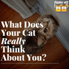 What Does Your Cat Really Think About You?