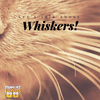 Let's Talk About Whiskers!