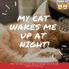 My Cat Wakes Me Up At 3 AM! What Should I Do!?