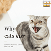 Why Do Cats Hiss? All You Need to Know About Your Cat Hissing!