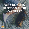 Why Do Cats Sleep Next to Their Owners?