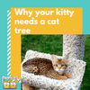 Why Your Kitty Needs A Cat Tree