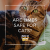 Are Limes Safe for Cats?
