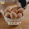 Can Cats Eat Eggs?