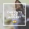 Can Cats Have Apples?