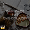 Can Cats Eat Chocolates?