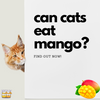 Here's the Thing: Can Cats Eat Mango?