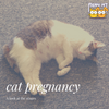 Stages of Cat Pregnancy