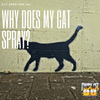 Cat Spraying 101: Why Does My Cat Spray?