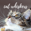 Kitty 101: How Many Whiskers Do Cats Have?