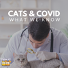 Cats Test Positive for COVID-19: Cats and the Coronavirus