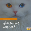 Feline Vision: How Far Can Cats See?