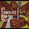 Is Chocolate Bad for Cats? Here's What You MUST Know