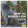 Here's Why Hemp is a Cat's Best Help!