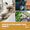How Do Cats Know Their Names?