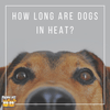 How Long Are Dogs In Heat?