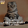 How Often Does a Cat Pee?