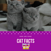 Some Awesome Cat Facts for You!