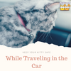Cats and Car Rides: Here's the Deal