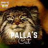 Pallas's cat: A Quick Peek