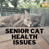 Senior Cat Health Issues: What You NEED to Know