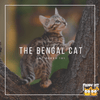 A Quick Look: The Bengal Cat