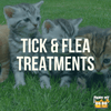 Cat Tick and Flea Treatment Options