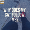 What Does It Mean If My Cat Follows Me Around?