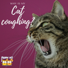 Kitty FAQs: Why Is My Cat Coughing?