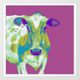 Purple Cow