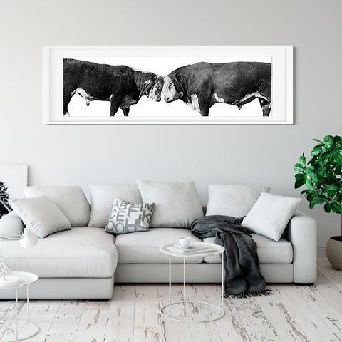 Bulls in Black and White