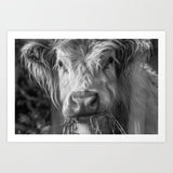 Highland Cow Close Up B&W