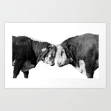 Black and White Bulls