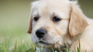 AUSTRALIA'S top 100 pet names for 2017