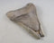 Megalodon Shark Tooth Fossil 1pc (E016-1)