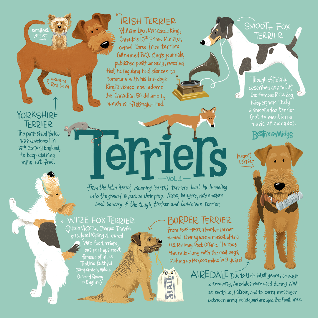 Terriers Vol. 1 Art Print