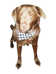 Fashion Paws Dog Scarves-Set of 2-You Choose Colors